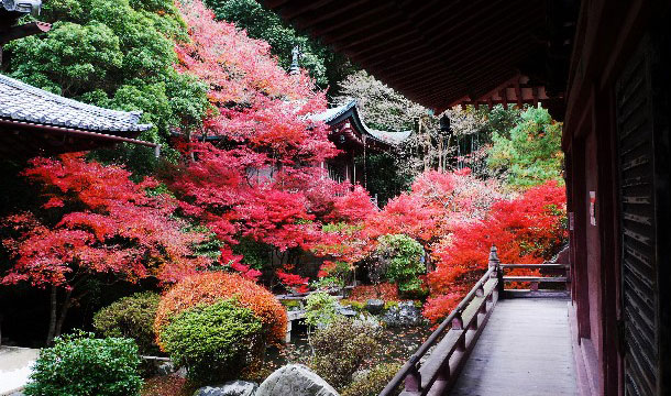 141020_autumn